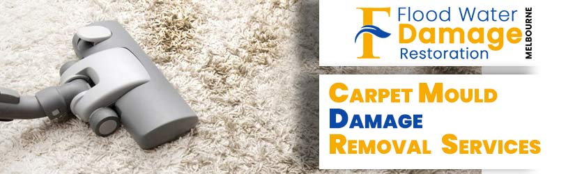 Carpet Mould Damage Removal Melbourne