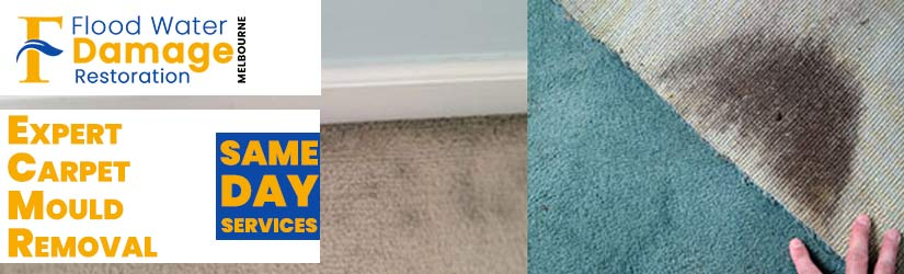 Expert Carpet Mould Removal